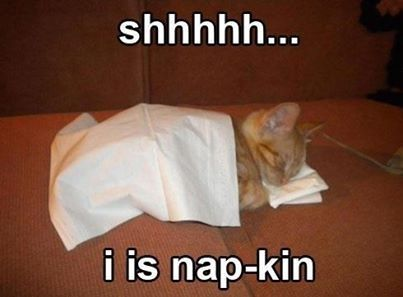 funny animal sleeping meme I is napkin